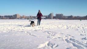Grappige langzame motie van Schor hond en aantrekkelijke jonge vrouw die hoge sneeuw naar camera doornemen stock videobeelden