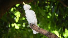 Grappige papegaai stock videobeelden