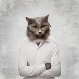 Grappige pluizige kat in glazen. collage op een grijs royalty-vrije stock fotografie