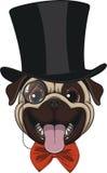 Grappige pug in hoed stock illustratie