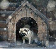 Grappige pug hond bij de hond Royalty-vrije Stock Afbeeldingen