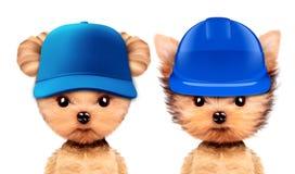 Grappige puppy in bouwvakker en honkbalhoed Royalty-vrije Stock Foto's