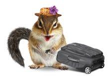 Grappige reiziger, dierlijke aardeekhoorn met koffer op wit Stock Foto