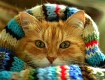 Grappige rode kat stock afbeelding