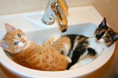 Grappige scène - twee katjesslaap in een wasbak Het is humoristische foto met komedieconcept stock afbeelding