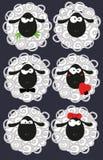 Grappige schapen op een zwarte achtergrond Stock Foto