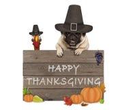 Grappige Turkije en pug hond die pelgrimshoed voor Thanksgiving day en houten teken met tekst gelukkige dankzegging dragen royalty-vrije stock fotografie