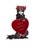 Grappige Valentine Dog Holding Heart Candy-Doos Stock Afbeeldingen