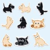 Grappige vastgestelde stickers van Schots Terrier Stock Fotografie