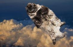Grappige Vette kat die in de hemel vliegen Royalty-vrije Stock Afbeeldingen