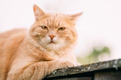 Grappige Vette Rode Cat Sitting On Fence In-de Zomerdag Royalty-vrije Stock Afbeeldingen