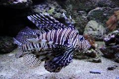 Grappige vissen Royalty-vrije Stock Foto's