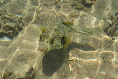 Grappige vissen Stock Foto's