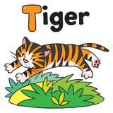 Grappige wilde tijger, voor ABC Alfabet T Stock Foto