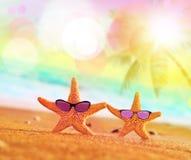 Grappige zeester met sunglass op het zandige strand stock foto's