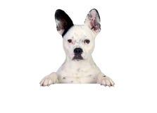 Grappige zwart-witte hond Stock Afbeeldingen