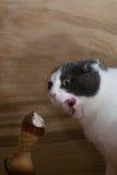 Grappige zwart-witte kat die roomijskegel op houten achtergrond eten Stock Afbeelding