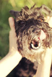 Grappige zwarte hond stock foto's