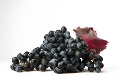 Grappolo di Lambrusco Stockbild