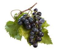 Grappolo di uva nera royalty free stock photography