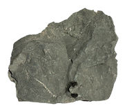 Graptolite Stock Images