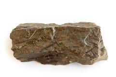 Graptolite - monograptus Imagem de Stock Royalty Free