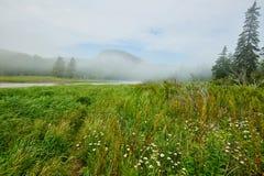 Gras、树和水 免版税图库摄影