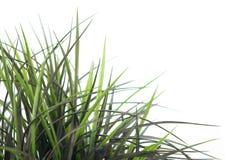 Gras-Änderung am Objektprogramm 3 Stockbild