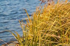 Gras über Wasser Stockfoto