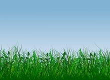 gras świeża zieleń ilustracji