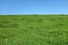 Gras и небо стоковая фотография rf