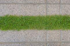 Gras текстуры и прокладки гравия Стоковые Изображения RF