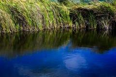 Gras 02 van het water royalty-vrije stock afbeeldingen