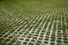 Gras. Stockbilder