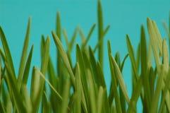 Gras Stockfotos