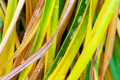 Gras. S in the fall with drops of dew Royalty Free Stock Photo
