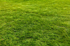 Gras lizenzfreie stockbilder
