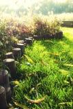 Gras Stockbild