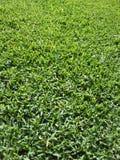 Gras 2 Stockbild