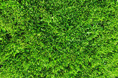 Gras Stockfotografie