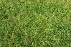 Gras #3 Stockfotos