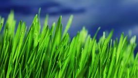Gras stock video