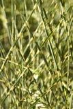 Gras Stockfoto