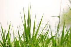 Gras arkivbild