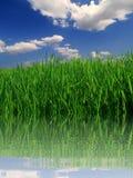 Gras Stock Foto's
