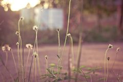Gras Stock Afbeeldingen