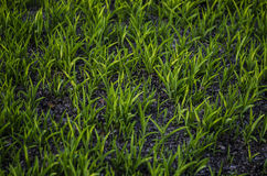 gras Stockfotos