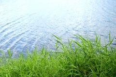 Gras aan rivierkant Stock Foto's