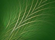Gras/Aanwijsstokje Royalty-vrije Stock Fotografie