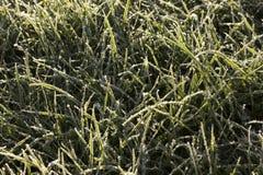 Gras abgedeckt mit Frost Lizenzfreie Stockfotos